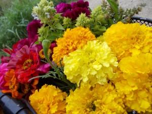flori poiana flori